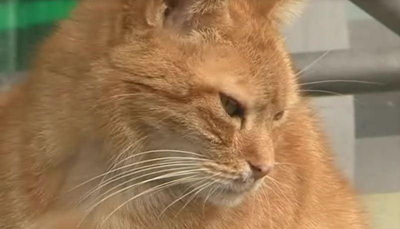Investe un gatto e se ne va: multa per omissione di soccorso