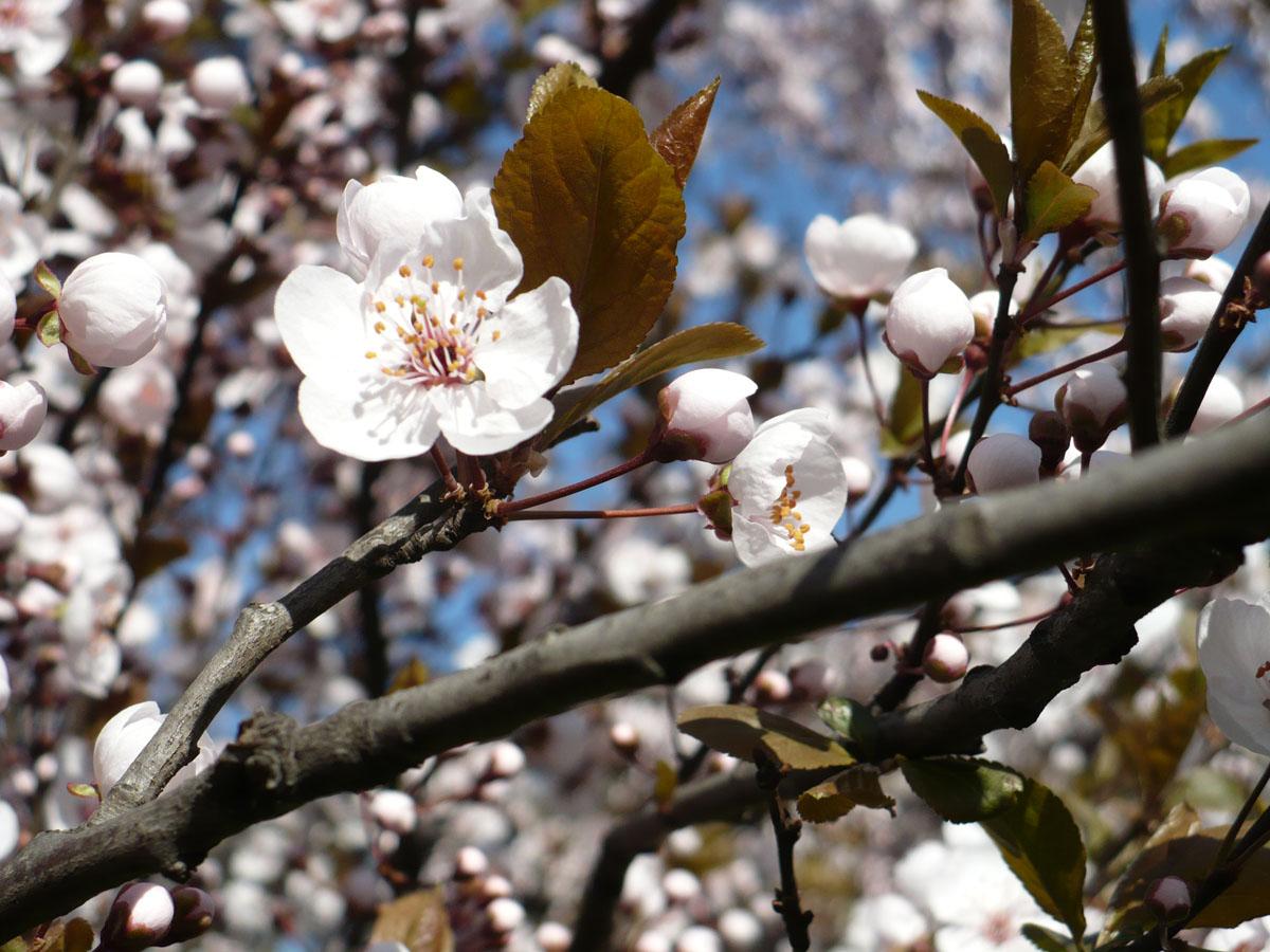 Sboccia la primavera con 16 gradi ma da giovedì torna il maltempo