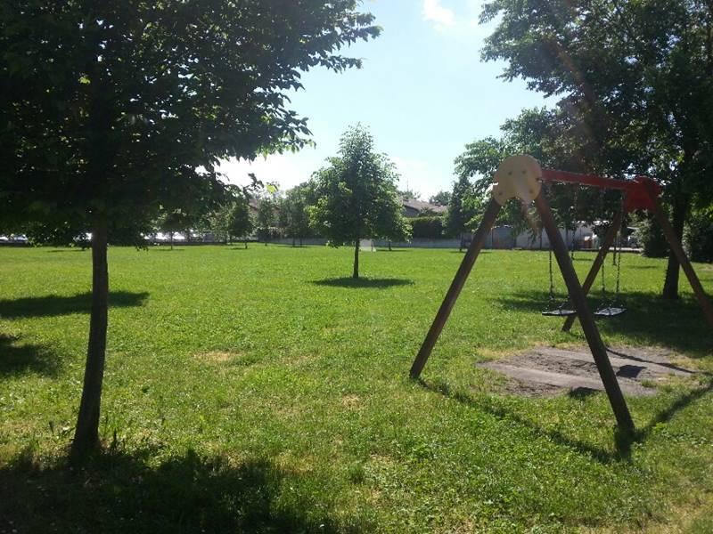 Nuovo regolamento e censimento di tutti gli alberi presenti a Piacenza
