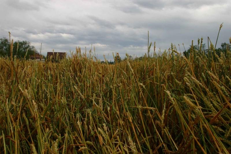 Maltempo e frane, agli agricoltori arrivano i soldi per i danni di inizio 2013