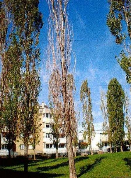 Un albero da abbattere