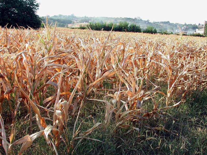 Dichiarato lo stato di crisi regionale: via libera a prelievi straordinari di acqua per l'agricoltura