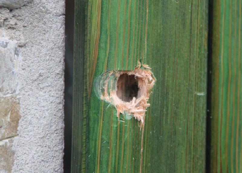 Bobbio, proiettili per cinghiali distruggono una porta. Scatta la denuncia