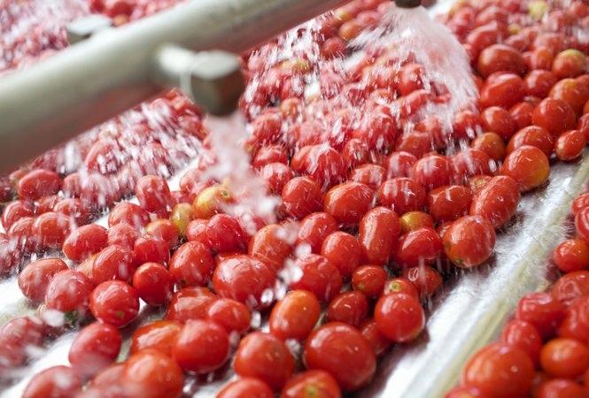 Pomodoro, la campagna peggiore degli ultimi 10 anni. Calo del 19%