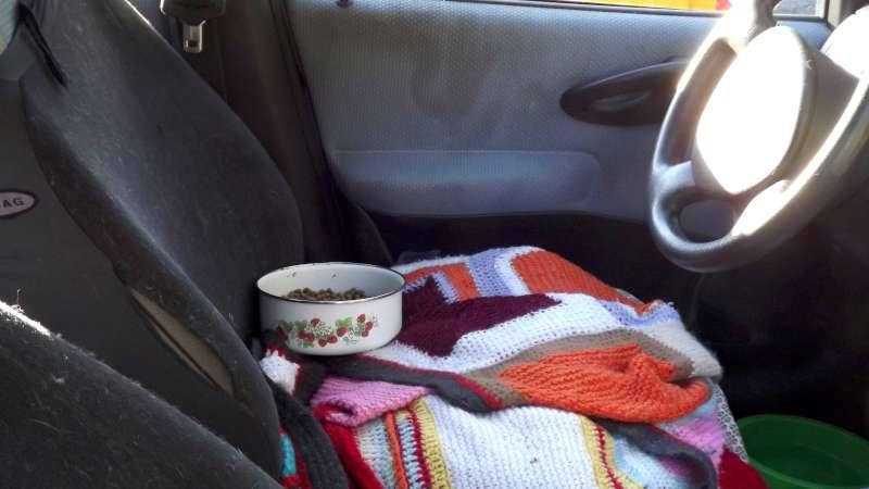 Donna che dorme in auto