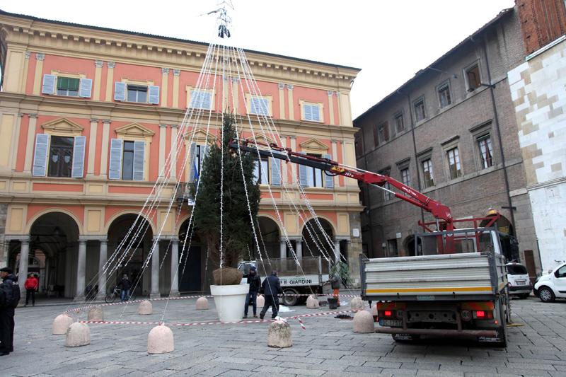 L'abete in Piazza Cavalli