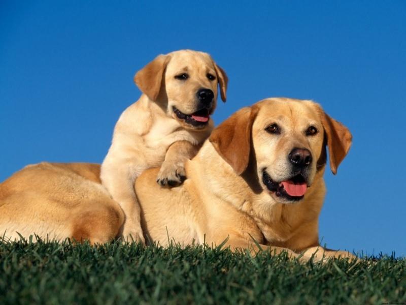 cane-e-cucciolo-424467