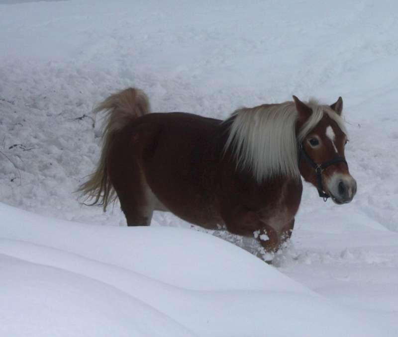 una cavalla nella neve (immagine d'archivio)