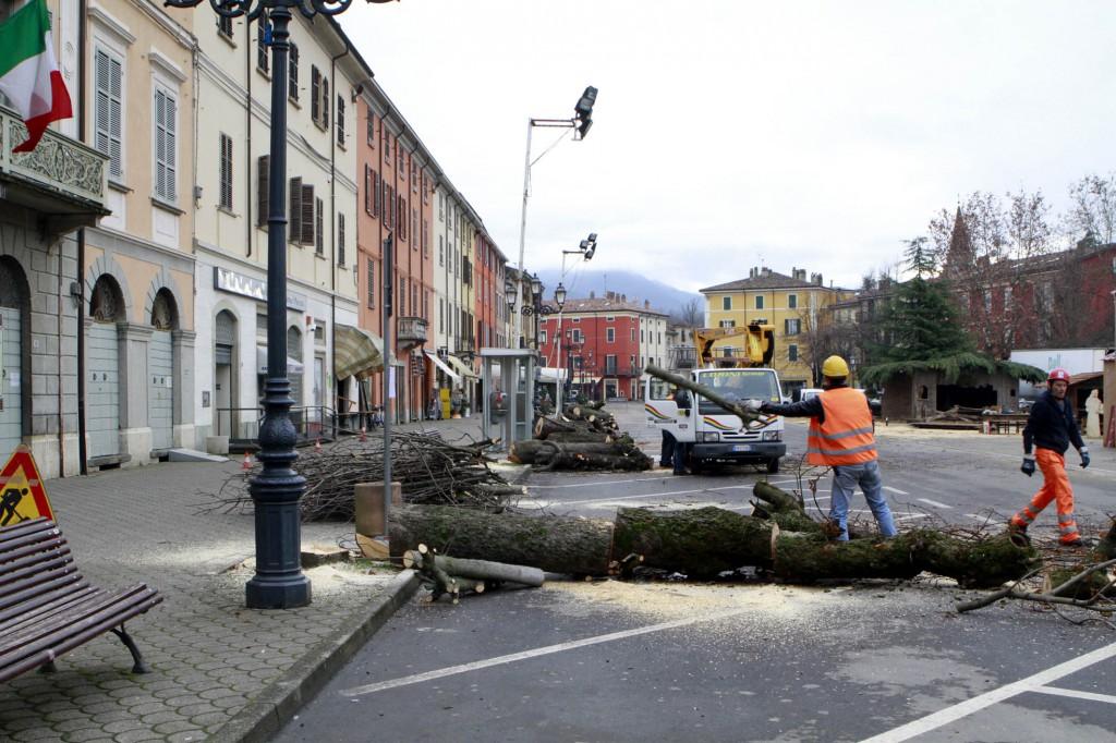 bettola alberi tagliati