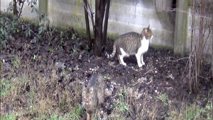 foto gatti2