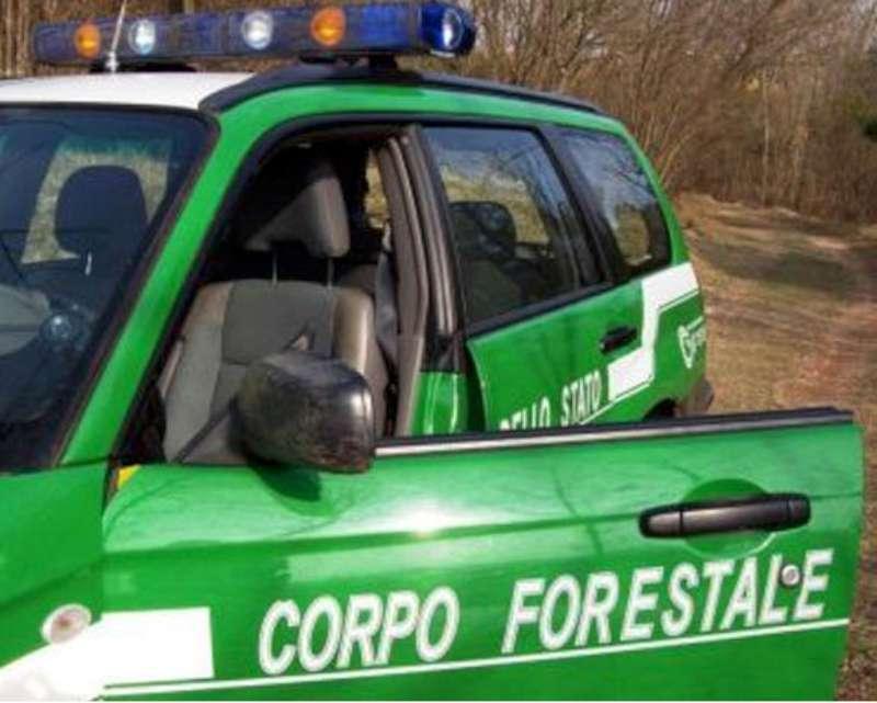 Corpo Forestale dello Stato (12)