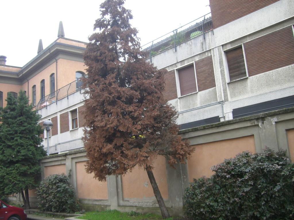 Scuola Mazzini (18)