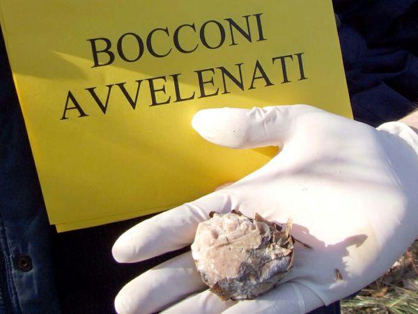 Bocconi avvelenati, sei segnalazioni in Val Nure e Val Chero negli ultimi mesi