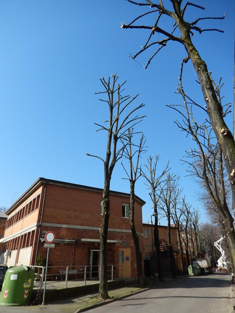 Potatura alberi (9)