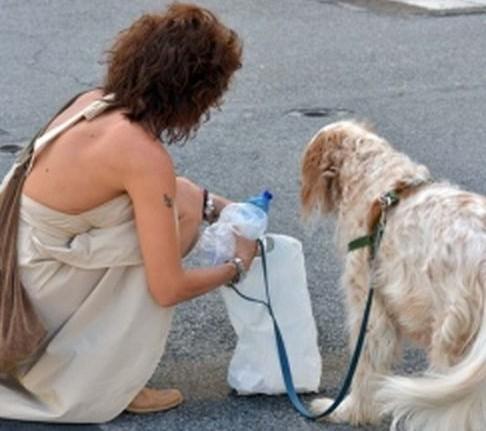 pulizia pipì cani