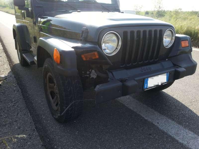L'auto danneggiata dopo aver investito il capriolo