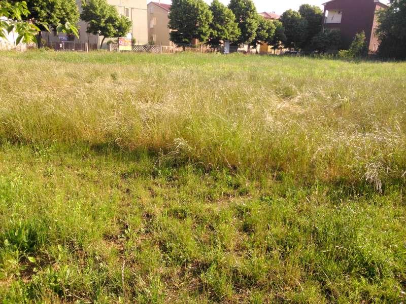 Parco delle Pace, erba alta-800