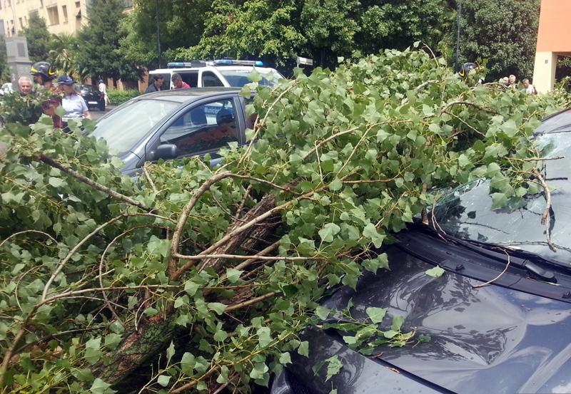 Nubifragio su tutta la provincia. In città pericolo per due alberi caduti