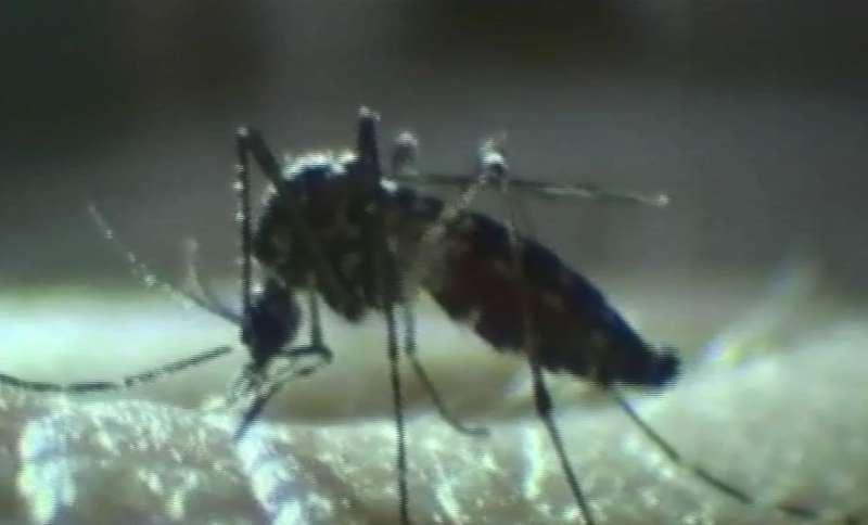 Zanzara tigre: multe anche a Piacenza contro chi non la combatte