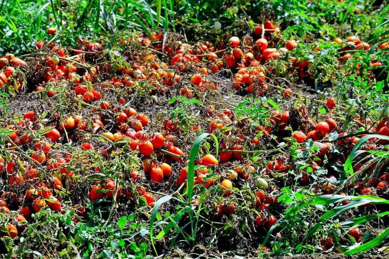 pomodori-800