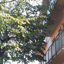 """Via Radini Tedeschi, i residenti: """"Semaforo eterno e alberi in casa"""""""
