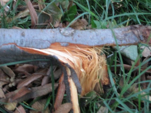 25.10.2014 base albero divelta (2)