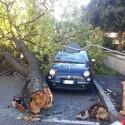 Forti raffiche di vento, grosso albero cade sulle auto in via Cerri