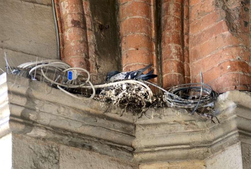 piccioni in citta (1)-800