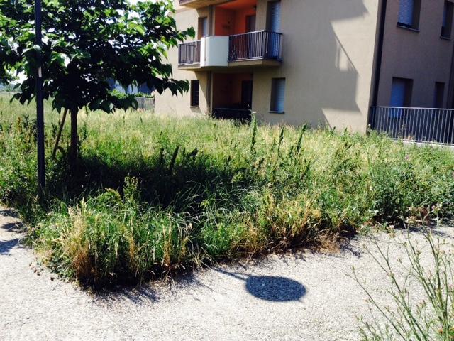 Giardini incolti (1)