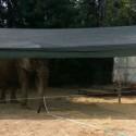 Pianello, l'elefantessa del circo ha bisogno di cibo: appello per la raccolta