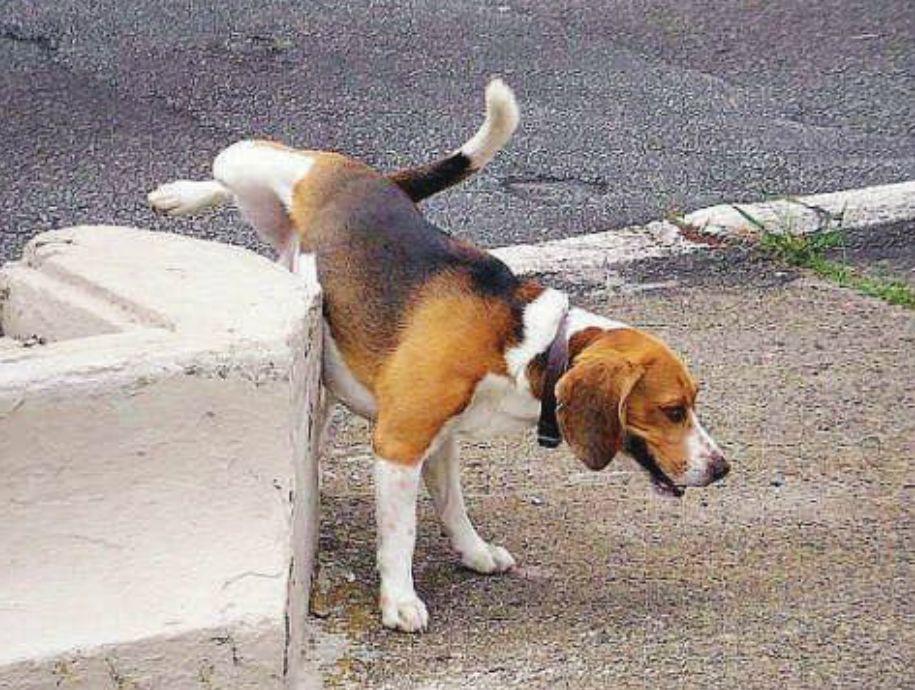 ordinanza per la pipì dei cani