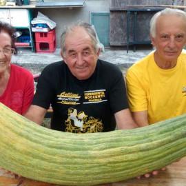 Record mondiale a Piacenza: ecco il cetriolo più lungo e pesante