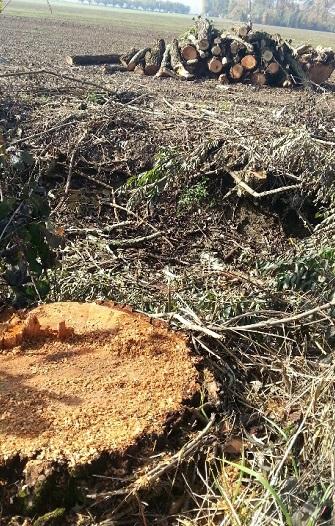 Taglio delle piante alla Besurica