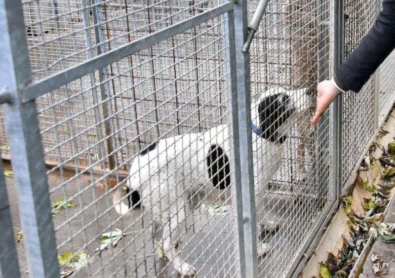 Calano gli abbandoni dei cani ma oltre 200 cercano ancora casa e affetto