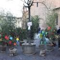 """La """"Marcia per il clima"""" porta un bosco in piazza Sant'Antonino"""