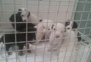 Trovati otto cuccioli abbandonati in via Maculani, stanno bene