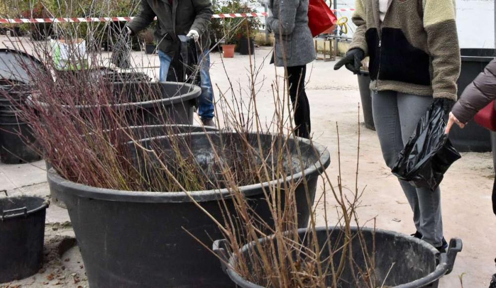 alberi e arbusti distribuiti dal comune (2)-1000