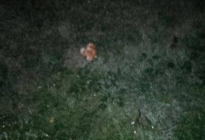 Cane muore avvelenato nel comune di Morfasso, accertamenti in corso