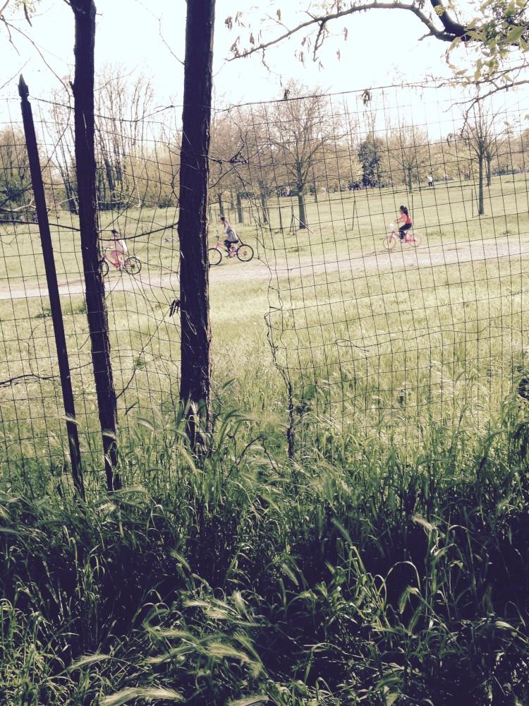 varchi nella recinzione del parco della Galleana (2)-1000