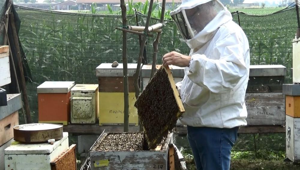 Miele, anno da dimenticare: produzione ridotta del 70%