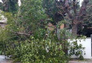 Vento forte nel Piacentino, a San Damiano pianta precipita su cascina