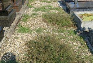 Cimitero di Piacenza, incuria e abbandono