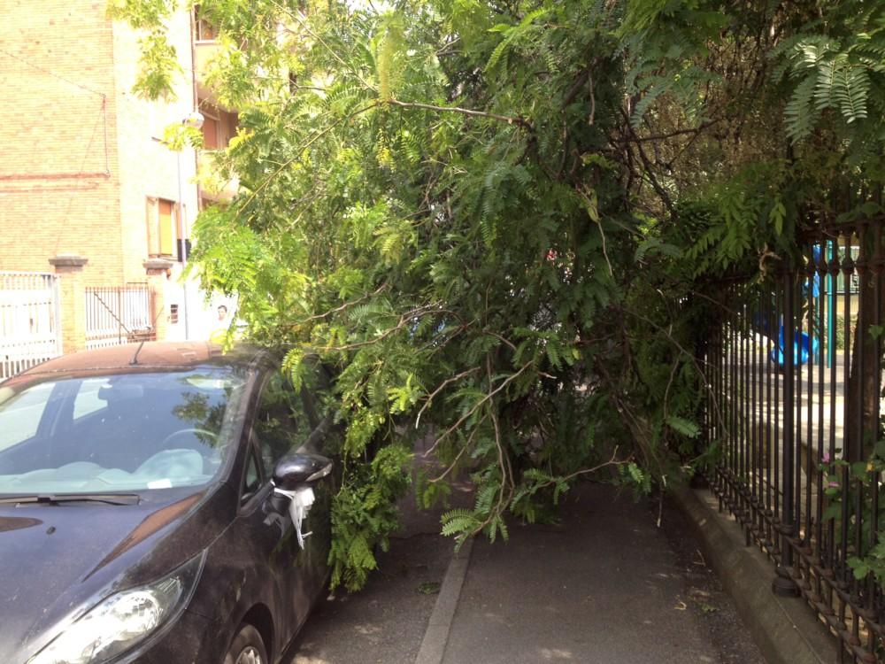 ramo caduto in via Giarelli (1)