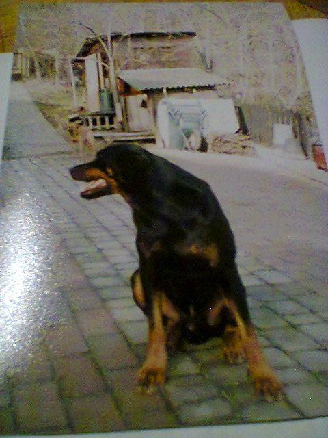 Foto0060 (1)