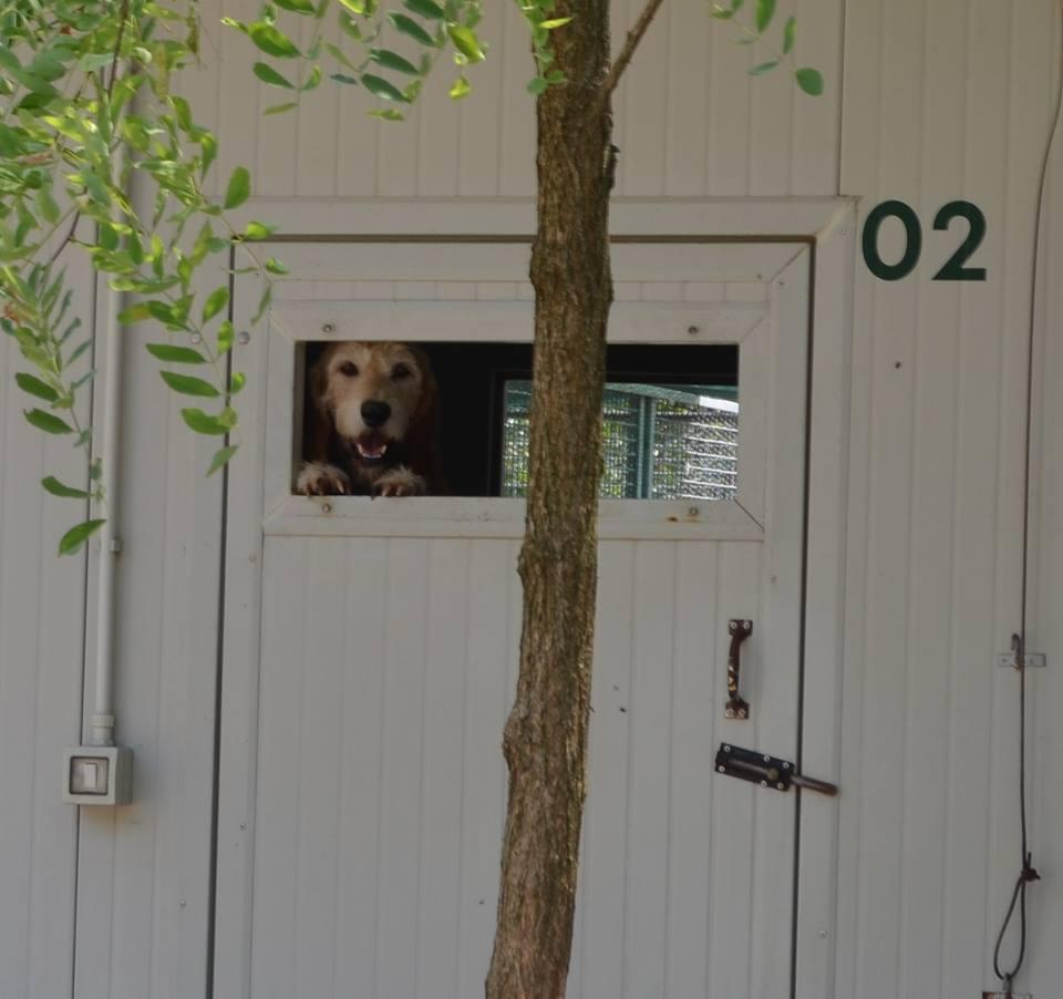 Lascia il cane in condizioni precarie in una rimessa: proprietario denunciato