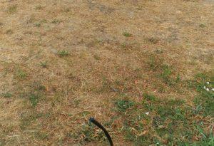 """Parco della Pace, """"Morti gli alberelli. Al Comune non interessa il verde"""""""