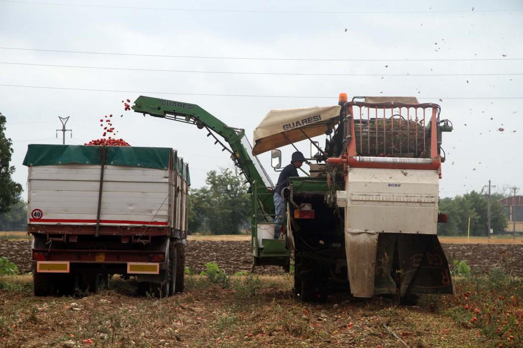 gariga raccolta pomodori automatica