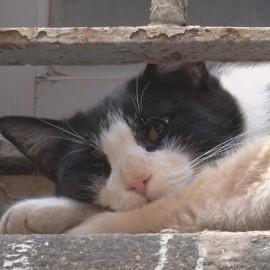 I commercianti di via XX dicono addio al gatto Silver, investito da un'auto