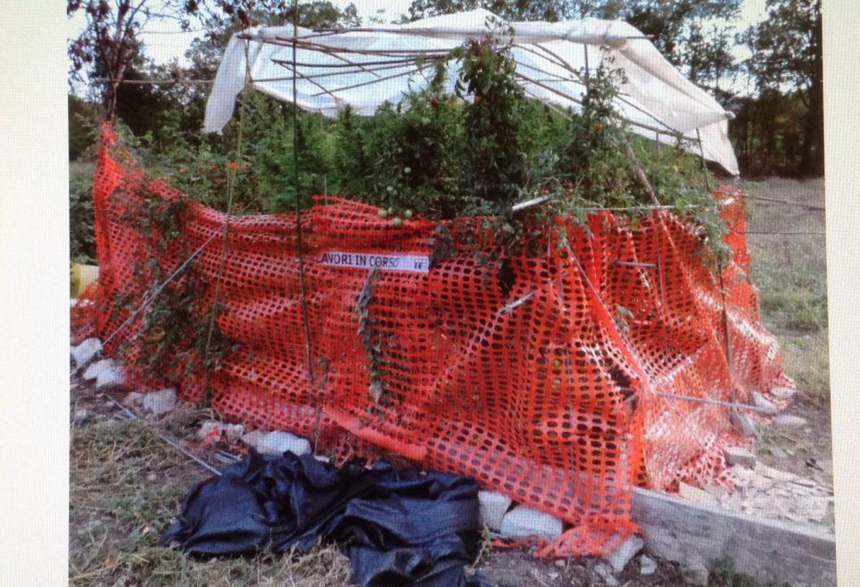 Vernasca piante di marijuana alte due metri segnalato 37enne for Piante da giardino alte 2 metri