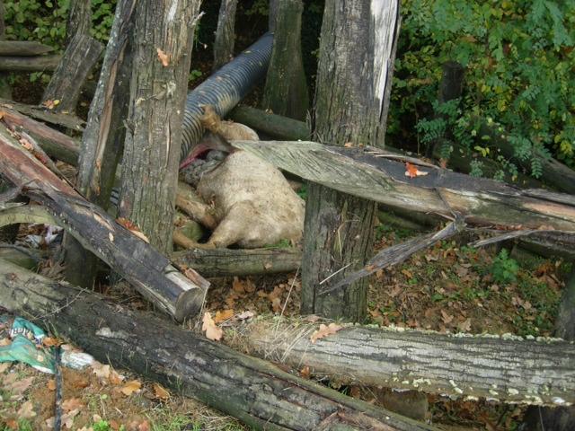 San giorgio cavallo sbranato nel recinto lupi o cani all for Quanto costa mantenere un cavallo